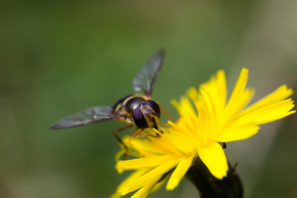 Fliege by saliyalein