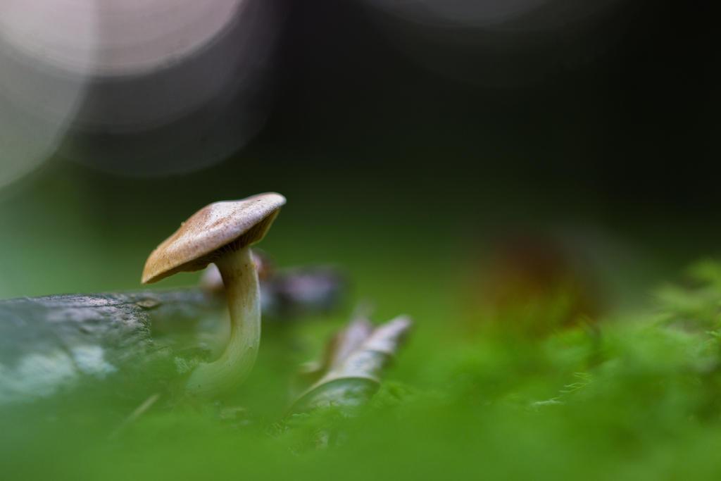 Fungi by saliyalein
