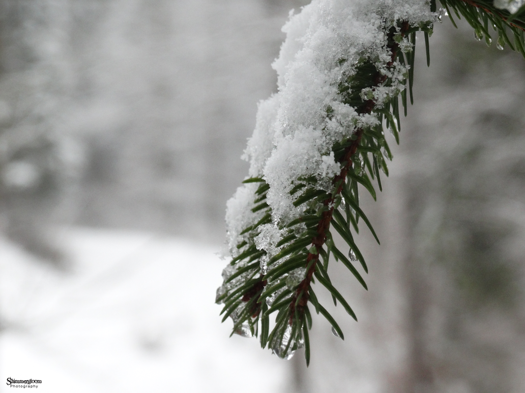 Melting Snow by ShimmergloomPhotoArt