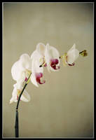 Flower by Guts80