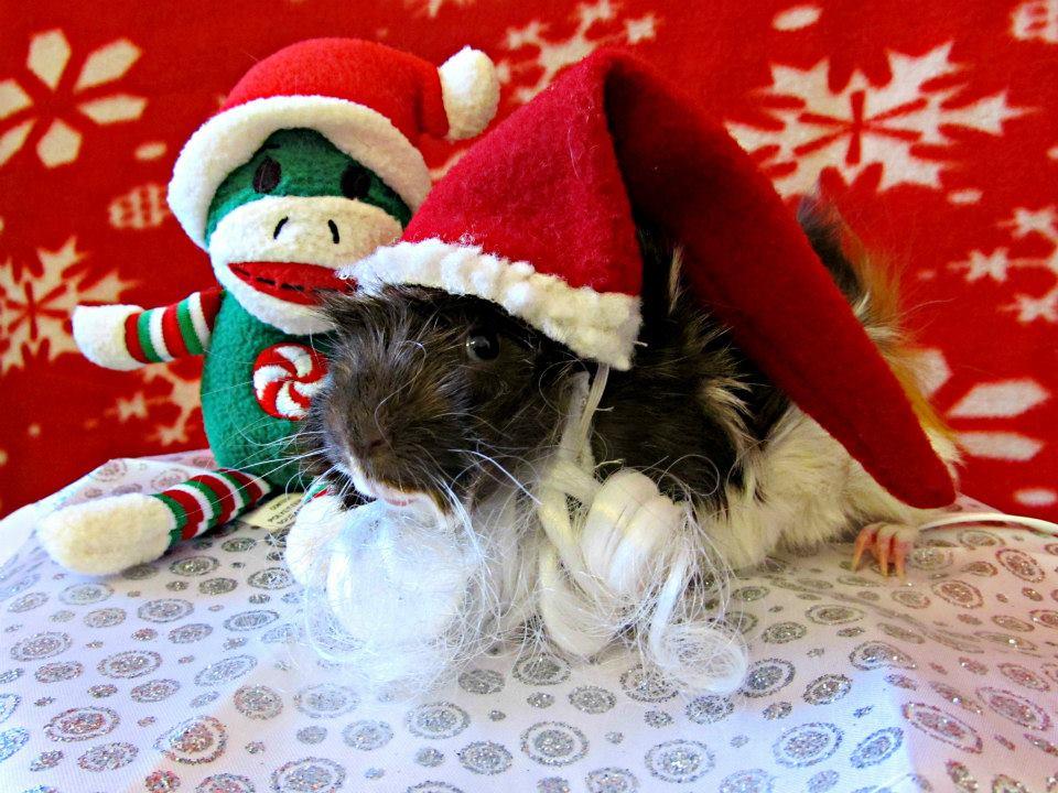 Santa Piggie by ThePiggieWheek