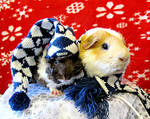 Tiberius and Ziggy