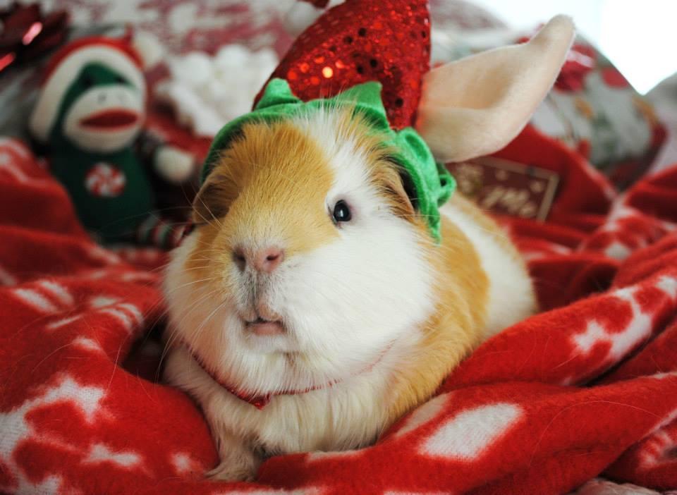 Santa's Little Helper by ThePiggieWheek