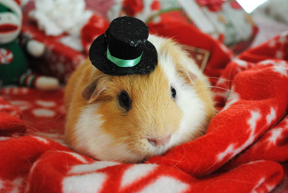 Gentlemen Wear Top Hats by ThePiggieWheek