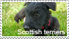 Scottish terrier stamp by Tollerka