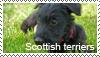 Scottish terrier stamp by Tollerka