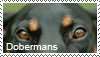 Doberman stamp by Tollerka