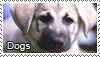 Love dogs stamp