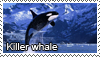 Killer whale stamp by Tollerka