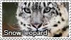 Snow leopard stamp by Tollerka