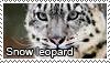 Snow leopard stamp by Tollerka