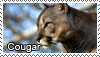 Cougar stamp by Tollerka
