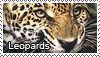 Leopard stamp by Tollerka