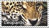Leopard stamp by Tollerka