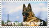 Shorthair ger. shepherd stamp by Tollerka
