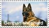 Shorthair ger. shepherd stamp