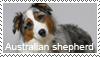 Australian shepherd stamp