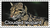 Clouded Leopard stamp by Tollerka