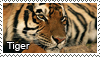 Tiger stamp by Tollerka