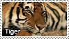 Tiger stamp by Tollerka