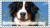 Berneese mountain dog stamp