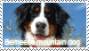 Berneese mountain dog stamp by Tollerka