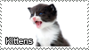Kitten stamp