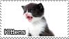 Kitten stamp by Tollerka