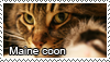 Maine coon stamp