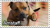 American staff. terrier stamp by Tollerka