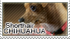 Shorthair chihuahua stamp by Tollerka