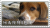 Harrier stamp by Tollerka