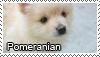 Pomeranian stamp