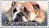 English bulldog stamp by Tollerka