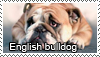 English bulldog stamp by Tollerka