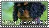 King charles spaniel stamp by Tollerka