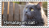 Himalayan cats stamp by Tollerka