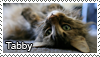 Tabby stamp