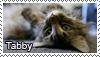 Tabby stamp by Tollerka