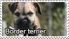 Border terriers stamp by Tollerka
