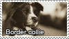 Border collie stamp by Tollerka