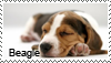 Beagle stamp by Tollerka