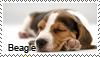 Beagle stamp by Tollerka