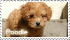 Poodle stamp by Tollerka