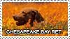 Chesapeake bay retriever stamp by Tollerka