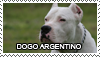 Dogo argentino stamp by Tollerka