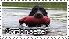 Gordon setter stamp by Tollerka