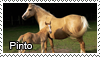 Pinto stamp by Tollerka