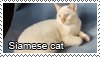 Siamese cat stamp by Tollerka