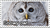 Snowy owl stamp by Tollerka